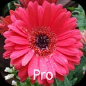 Mother's Flowers Pro, Nexus 7 logo