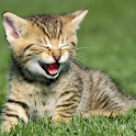 Cute Kitten Wallpapers HD icon