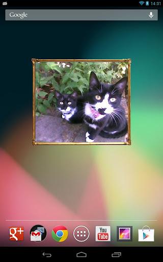 I Love Kittens Widget