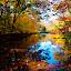 Painter's Delight by Carl Testo - Landscapes Forests ( water, eli, autumn, forest, color, colors, landscape, portrait, object, filter forge )