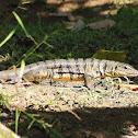 matte lizard