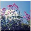 Pink wild flowers....