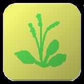 Japnese Wild Flower List