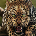 Life Of Leopard FREE APK for Bluestacks
