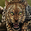 APK Game Life Of Leopard FREE for BB, BlackBerry