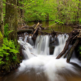 by Siniša Almaši - Nature Up Close Water ( water, up close, nature, tree, forest, spring, river,  )