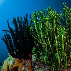 by Catalin Ienci - Landscapes Underwater ( reef, underwater, reefscape, ocean, seascape )