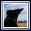 andFrame Photo Widget icon