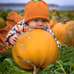 Baby on a Pumpkin by Gordon Follett - Babies & Children Babies