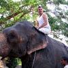 Asian Éléphant