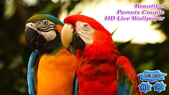 Beautiful Parrots Couple 3D- screenshot thumbnail