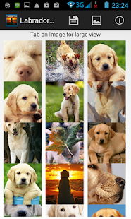 Labrador Wallpapers