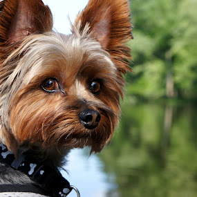 so serious by Christopher Wu - Animals - Dogs Portraits ( #showusyourpets, #garyfongpets, Hope,  )