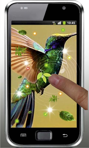 【免費個人化App】Colibri Songs live wallpaper-APP點子