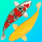 Koi Catalog icon