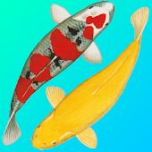 Koi Catalog