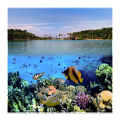 3D fish HD Live Wallpaper
