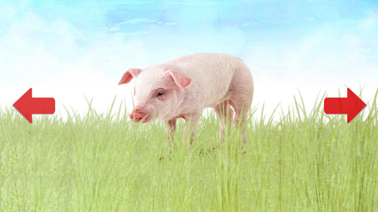 Dieren voor Peuters & Baby: screenshot