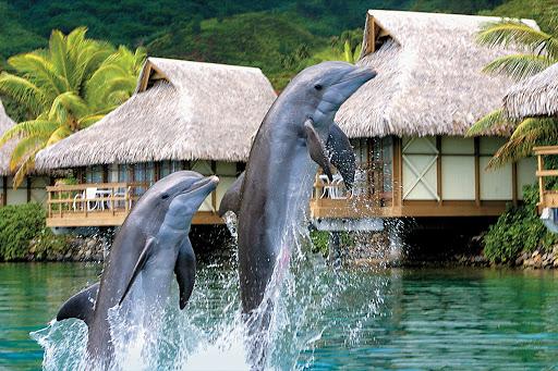 Moorea_Dolphin_Center - Take in the Moorea Dolphin Center during a Paul Gauguin cruise.