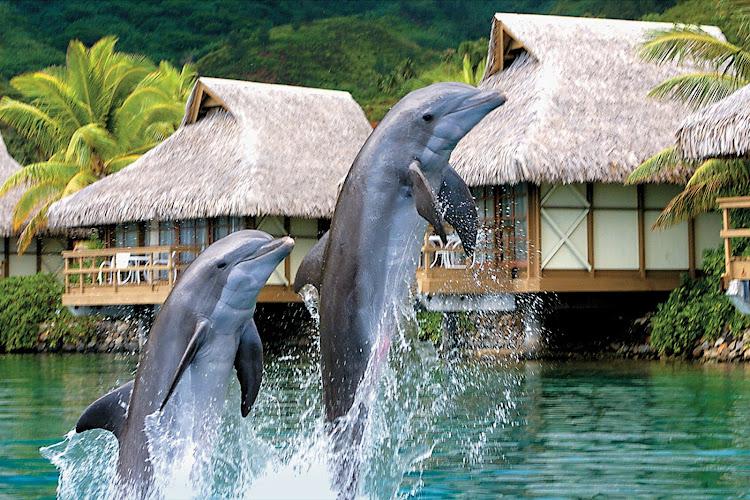 Take in the Moorea Dolphin Center during a Paul Gauguin cruise.