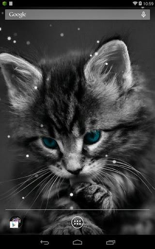 萌萌貓咪動態桌布|玩個人化App免費|玩APPs