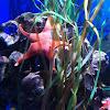 Star fish/Sea star