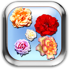Roses of Rome Live Wallpaper icon
