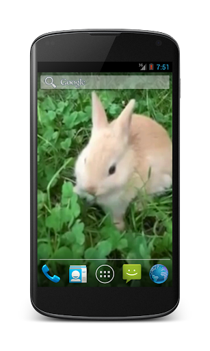 Bunny Free Video Wallpaper