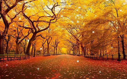 【免費個人化App】秋季動態壁紙-APP點子
