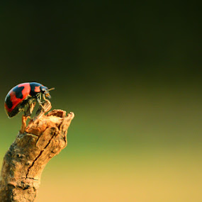 Mini by Himanshu Maya - Animals Insects & Spiders