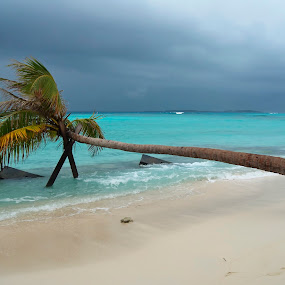 Coconut tree in Maldives by Dan Baciu - Landscapes Beaches ( dreaming, dream, dreammy, romantic, sea, holidays, ocean, leisure, maafushi, beach, beach wedding, caribbean, sun, island, holiday, beaches, palm tree, green sea, blue sea, wedding, meditating, maldives )
