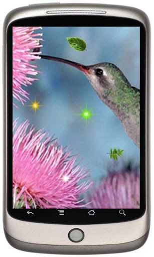 Humming Bird Collection LWP