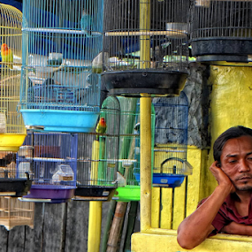 Bird Market by Herry Wibowo - City,  Street & Park  Markets & Shops