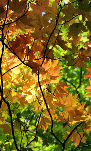 Autumn Wallpaper screenshots 3