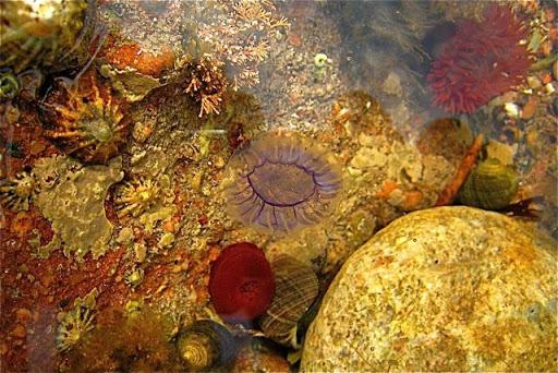 Coral Flower Wallpaper