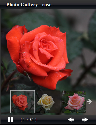 PHOTO GALLERY -ROSE-