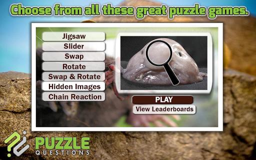 Weird Animals Puzzle Games