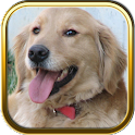 Golden Retriever Puzzle Games icon