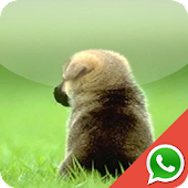 Puppies Wallpaper for WhatsApp