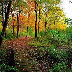 TOWARDS THE LIGHT by Bethany Kenney - Landscapes Forests ( fall, trail, hike,  )