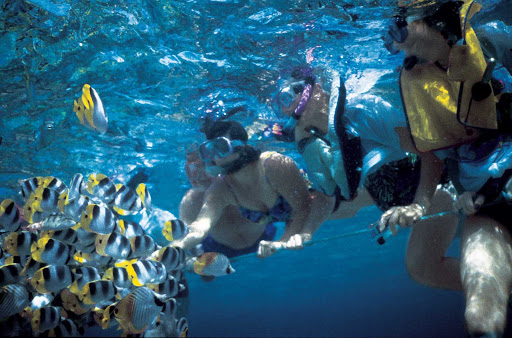 Windstar-Cruises-snorkeling-tropics - Get up close and personal with a school of tropical fish while snorkeling during your Windstar Cruises sailing.