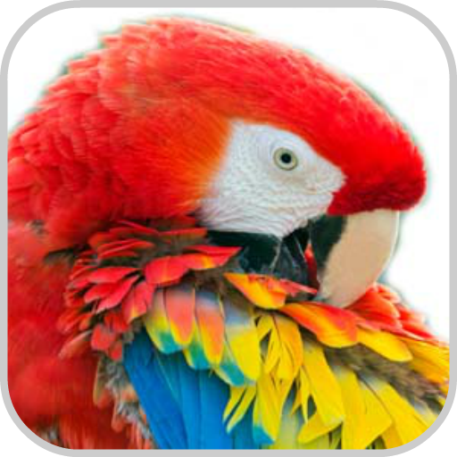 How To Draw Bird Parrot Macaw