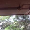Wasp hornet