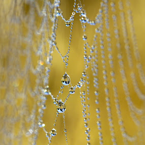 Webs We Weave by Lynne McClure - Nature Up Close Webs ( water, webs, macro photography, nature up close, dew drops, fall, color, colorful, nature,  )