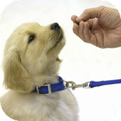 Dog Training Online Tips
