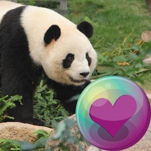 熊貓壁紙 生活 App LOGO-硬是要APP
