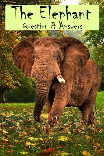 Elephant Facts Q A for Kids