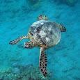 Hanauma Bay Marine Life