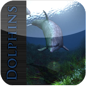 Dolphin Wallpaper FREE