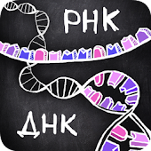 айМолекула: ДНК, РНК, белки